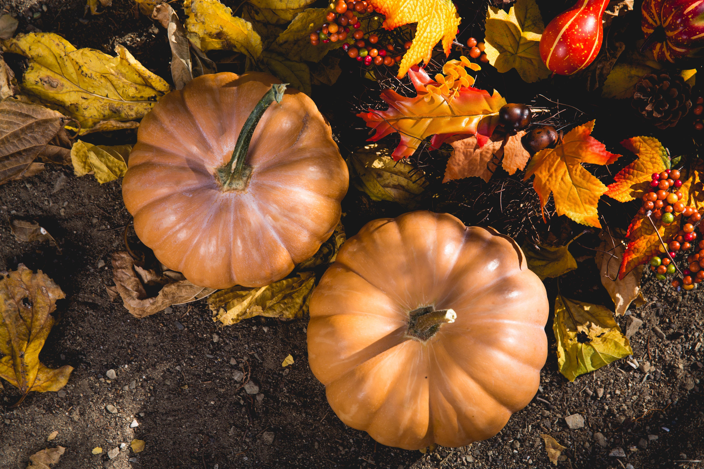 November pexels-photo-619421